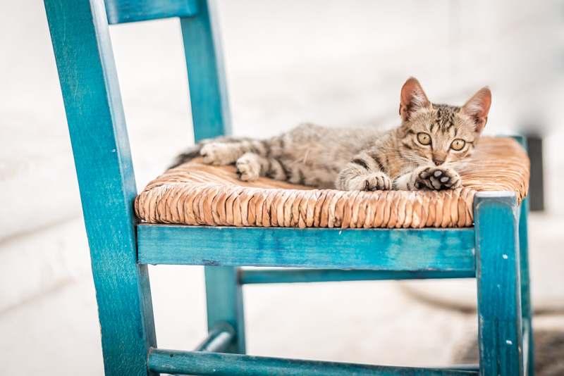 Typisch Griechenland Katzen Blau Weiß Kykladen