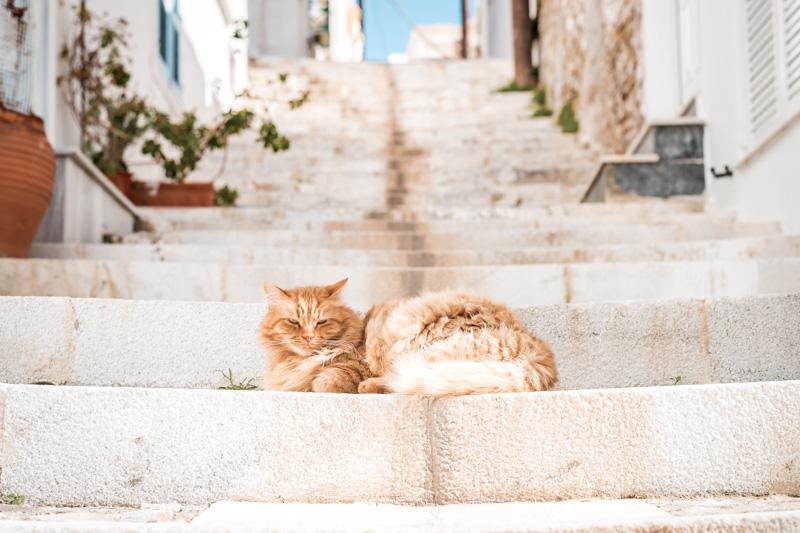 griechenland syros katzen