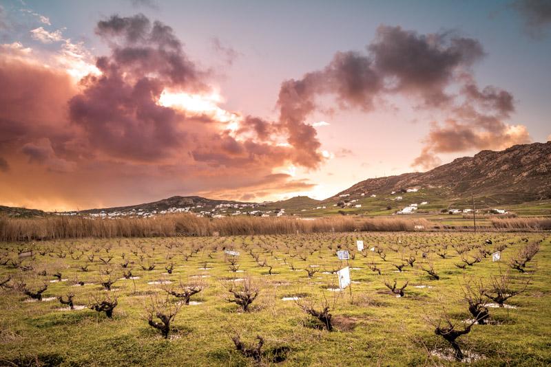 mykonos weingut vioma organic vineyard