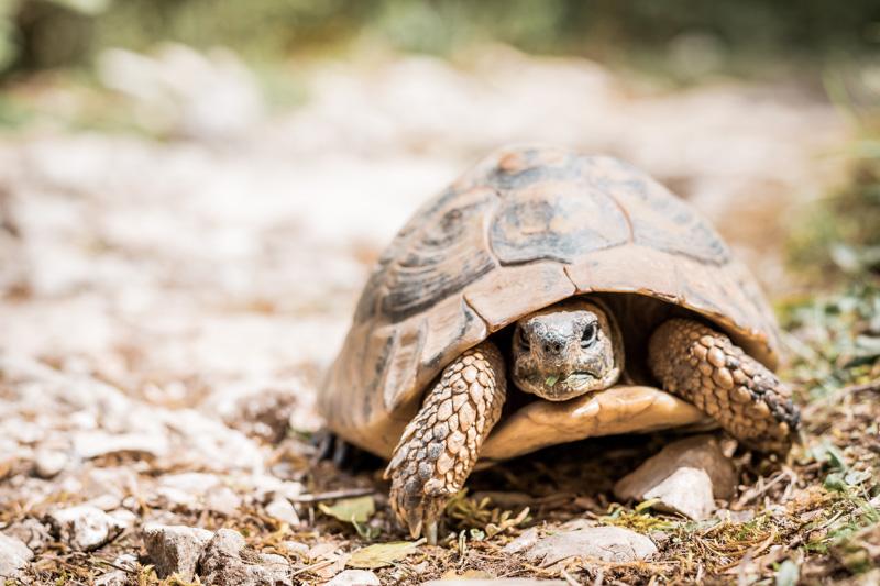 Griechenland Tierwelt Schildkröten Epirus