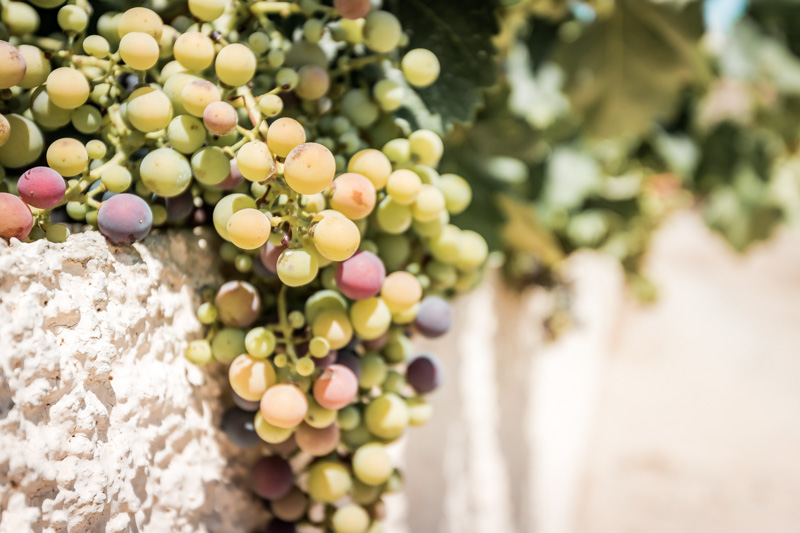 Kreta Wein Verkostung Touren