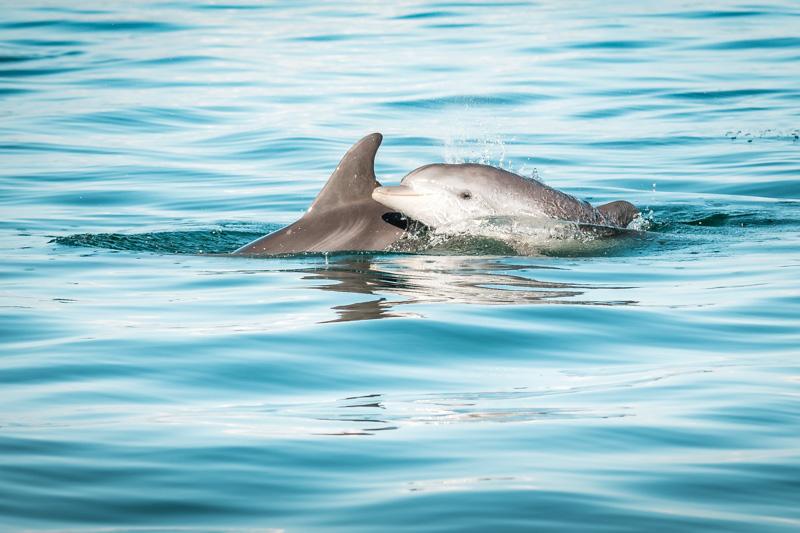 ambrakischer golf delfine arta greece