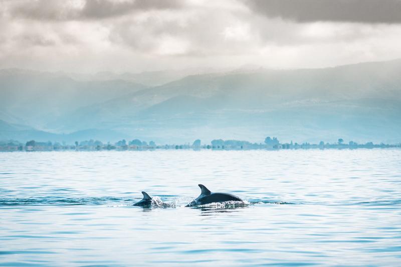 delfine ambrakischer golf arta griechenland