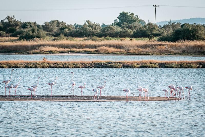 Lesvos flamingos salzseen kalloni lesbos