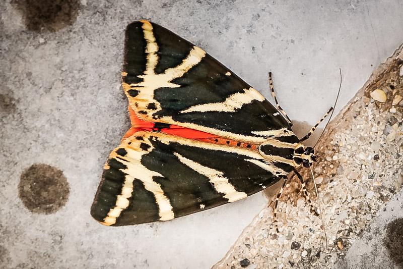 Schmetterling Tal Rhodos Erfahrung