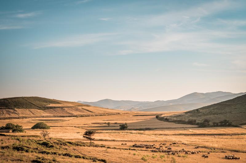 landwirtschaft viehzucht limnos griechenland