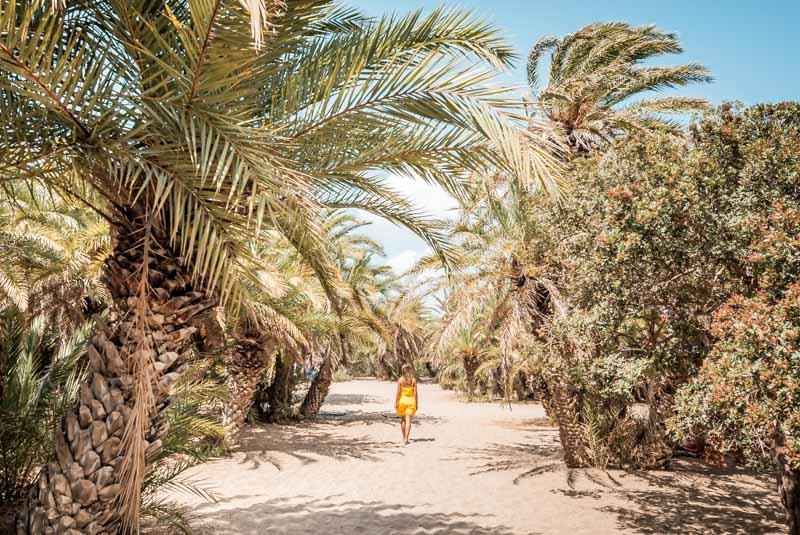 Kreta Strände Palmen Wald Vai