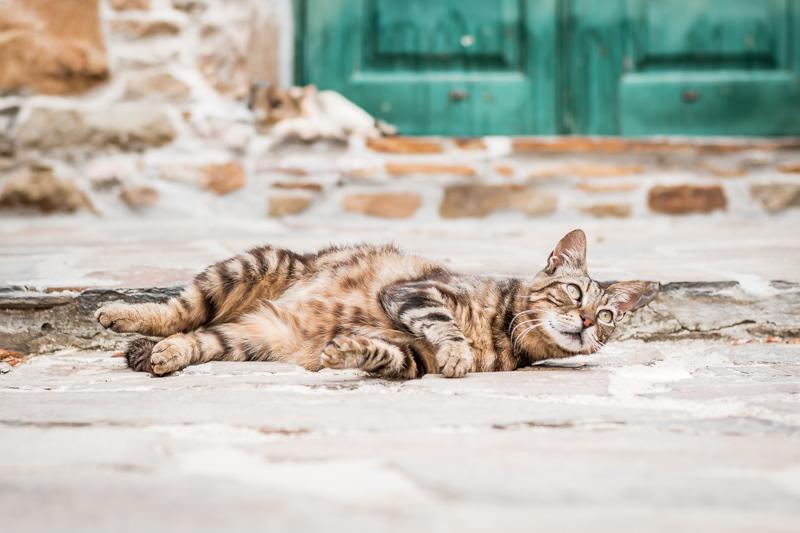 Griechenland Pauschalreise Last Minute Angebote Urlaub