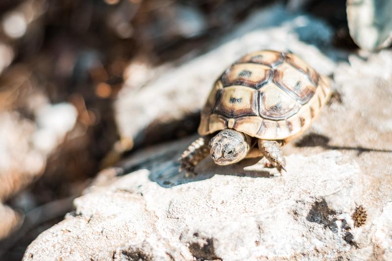 Tiere Griechenland Steckbrief Schildkröte