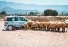Mietwagen Griechenland Kreta Autofahren Straßenverkehr