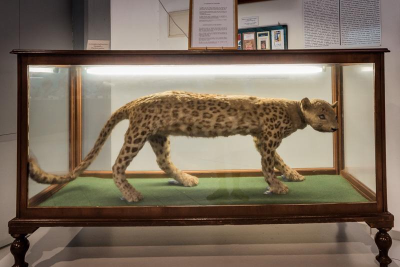 kaplani von samos museum naturgeschichte ägäis