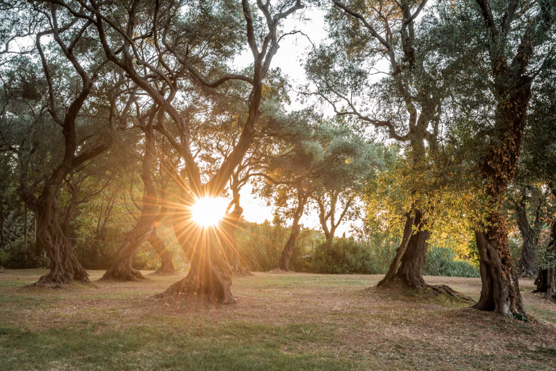 Korfu Oliven Baeume Wanderung Natur Urlaub
