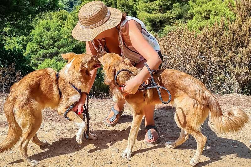 skiathos dog shelter tierschutz