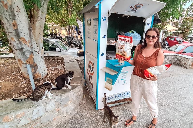 skiathos tierschutz cats welfare association