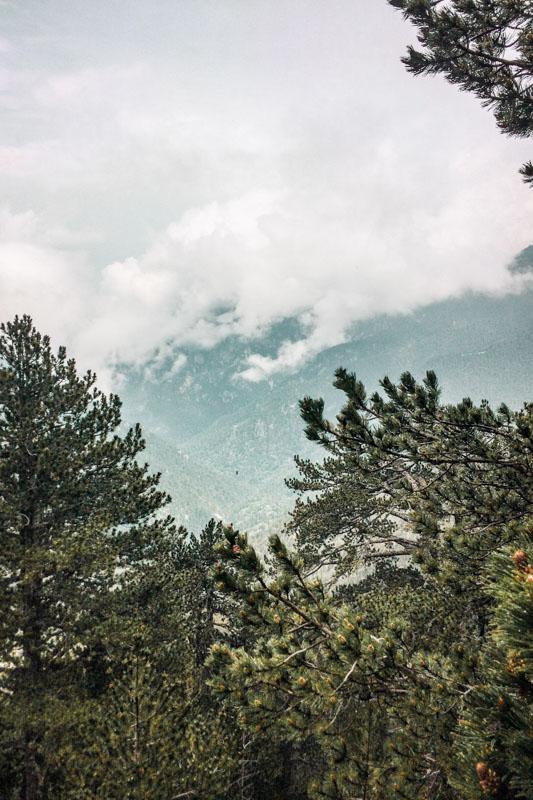 Litochoro Foehren Kiefernwald Natur Griechenland
